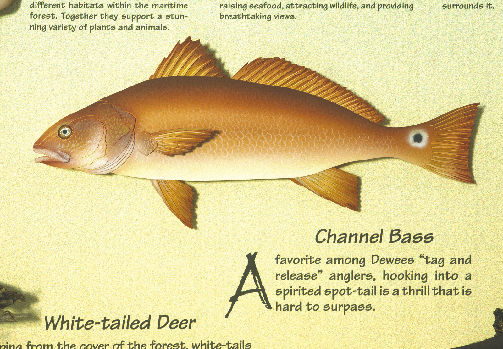 Dewees Channel Bass