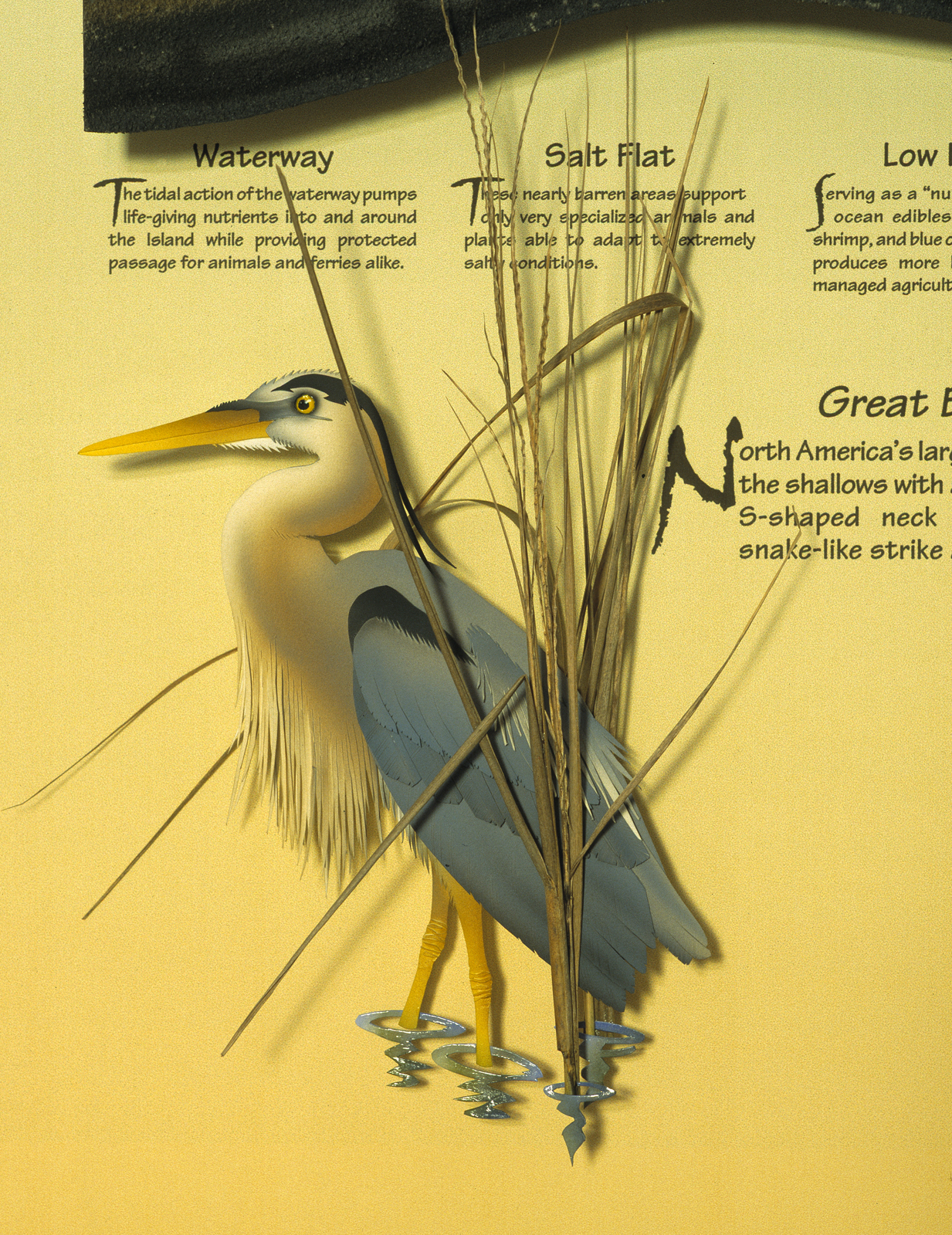 Dewees Great Blue Heron