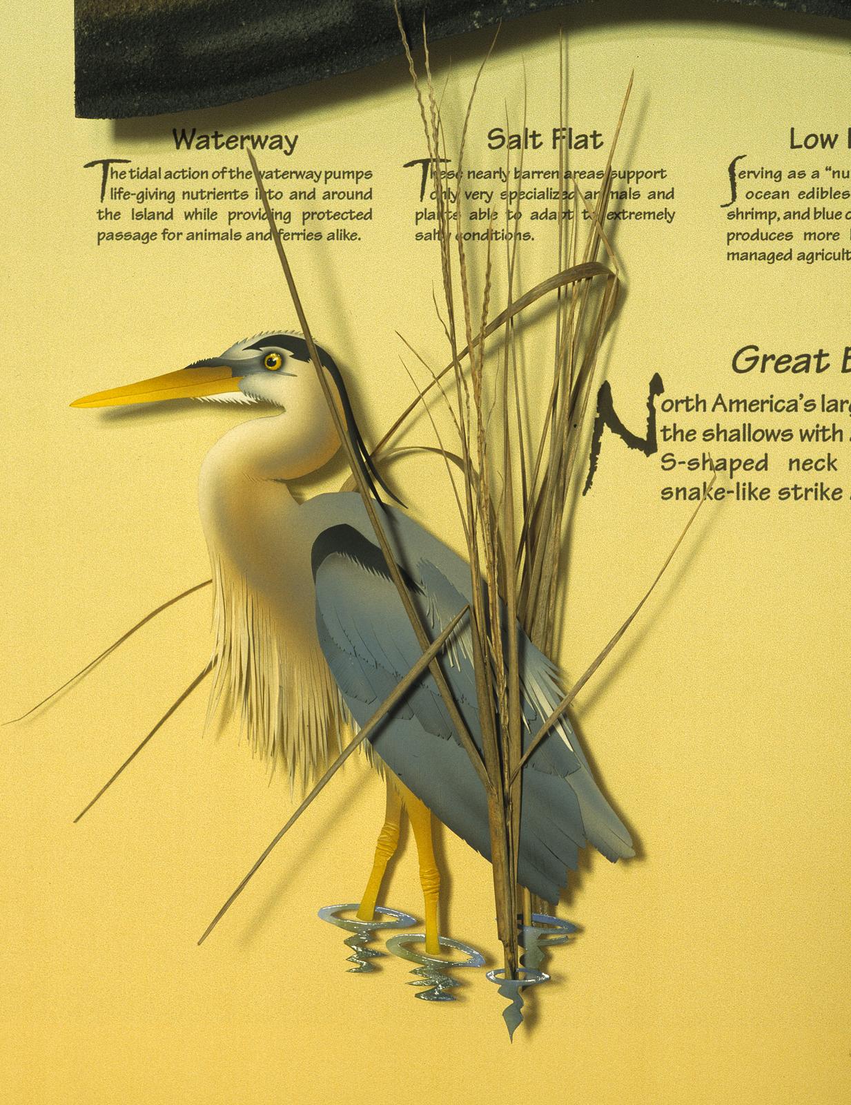 Dewees Great Blue Heron